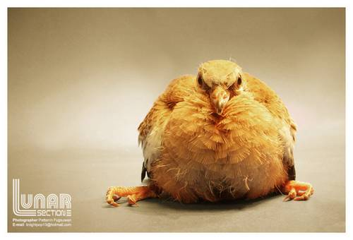 125 30 Funny Examples Of Fat Animals