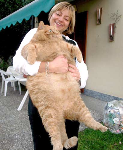 217 30 Funny Examples Of Fat Animals