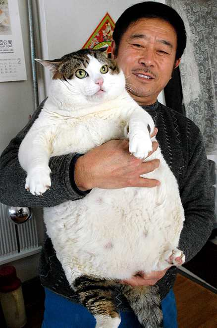 30 Funny Examples Of Fat Animals
