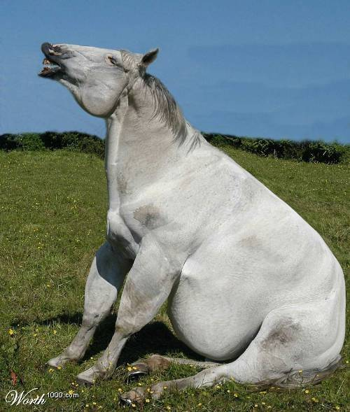 55 30 Funny Examples Of Fat Animals