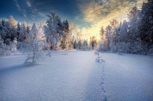 295 35 Splendid Examples Of Winter Photography