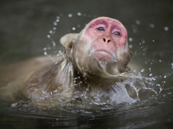 Macaque-photography-2