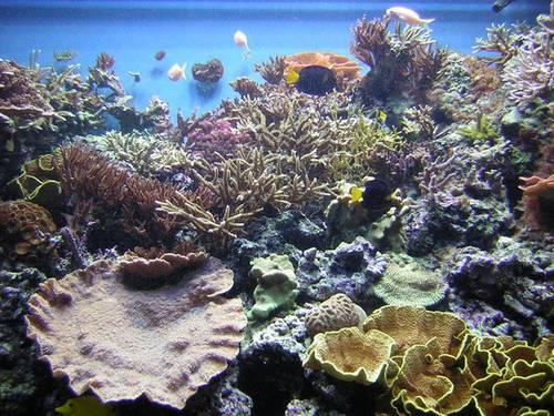 Underwater-Forest
