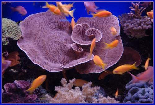 underwater 26
