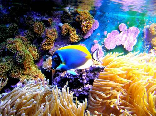 Underwater-65016416