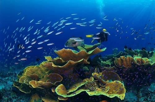Underwater-650164167