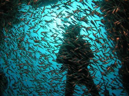 Underwater-6501641678