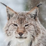 35 Awesome Photos Of Animals Under Snow