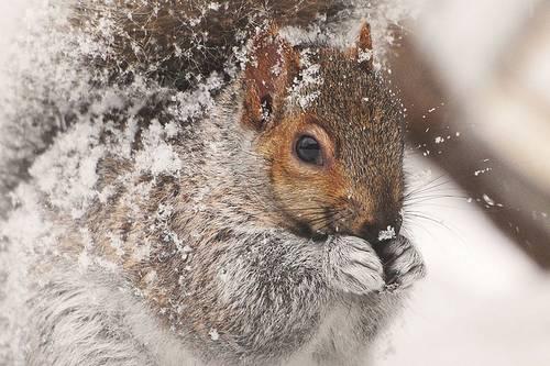 Brrr....It's Cold