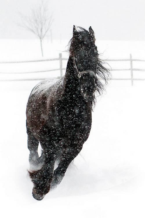 snowstrider