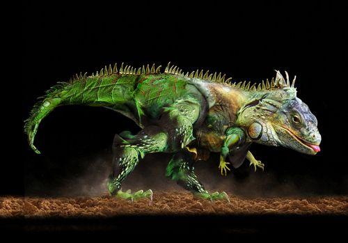 Tyranoiguanus ReX