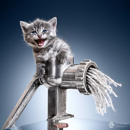 Minser: Kitten