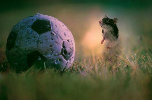 The top goal scorer