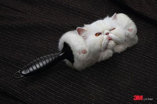 Cat Roller