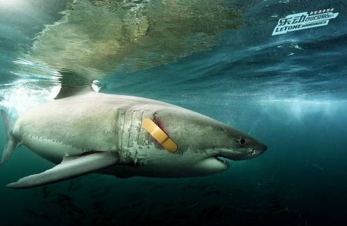 LeTone bandages: Shark