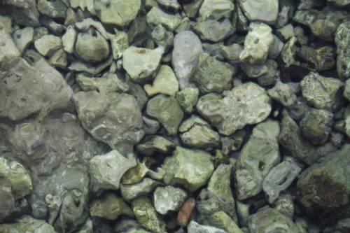 Stones Cres