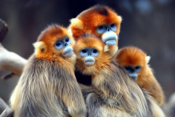 Baboon-photography-2