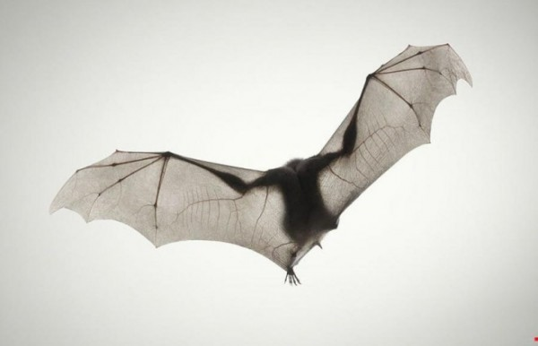 Bat-photography