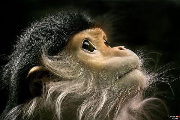 Chimpanzee-photography-2