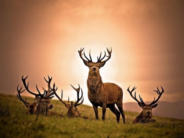 Deer-photography