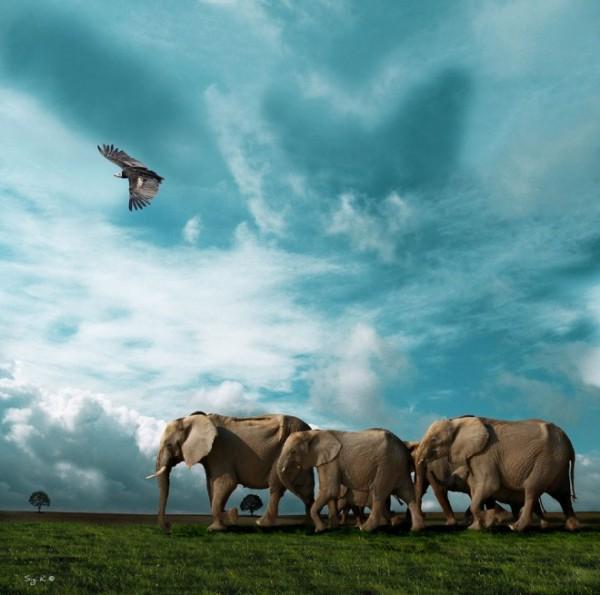 Elephant-photography