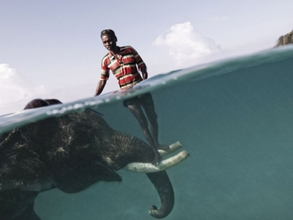 Elephant-underwater-photography