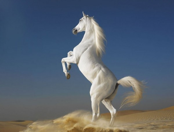 Horse-photography-2