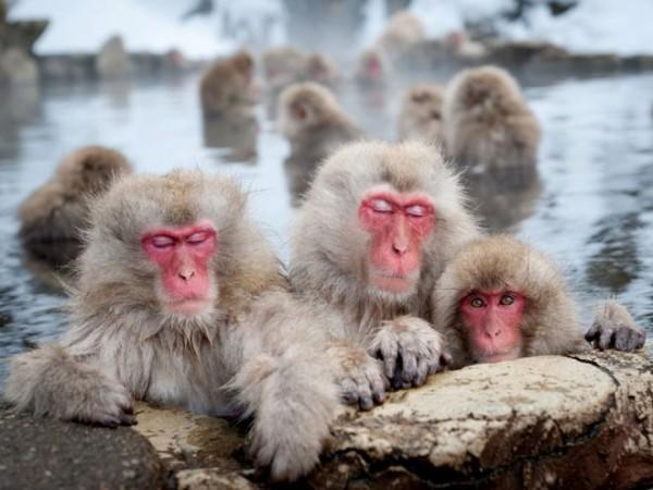 Macaques-nagano-photography