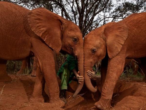 Orphan-elephants-photography