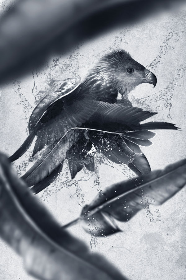 Design a Creative Bird Photo Manipulation
