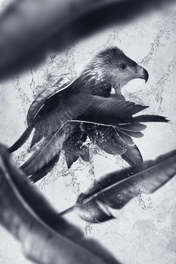 Design a Creative Bird Photo Manipulation